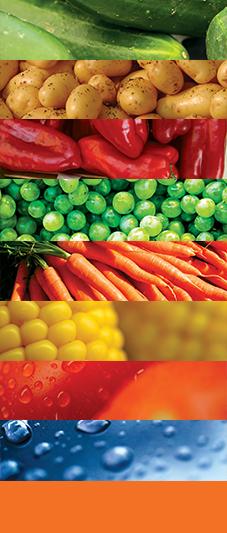 proiecte irigatii legume si fructe NaanDanJain